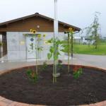 金古長寿会の方々が花壇を整備して花を植えていただきました。<br /> ありがとうございます。