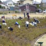 地域のみなさんが除草作業を手伝ってくださいました。