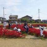 高崎野球連盟学童部所属チームみなさんの除草活動です。