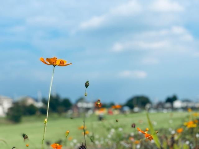【展望広場の花】